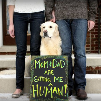 Inform-your-pet-about--a-human-sibling