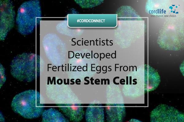 Scientists developed fertilized eggs- 16 Feb