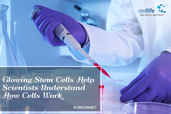 Glowing stem cells- 19 May