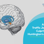 Cellular traffic jam is the culprit behind Huntington's disease
