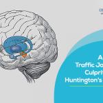 Cellular Traffic Jam Is The Culprit Behind Huntington's Disease