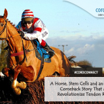 A horse, stem cells and an inspiring comeback story that may revolutionize tendon repair