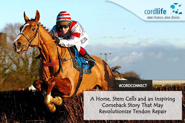 A horse, stem cells- 24 Aug