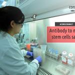 Antibody to make stem cells safer