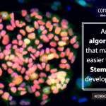 An algorithm that makes it easier to see stem cell development