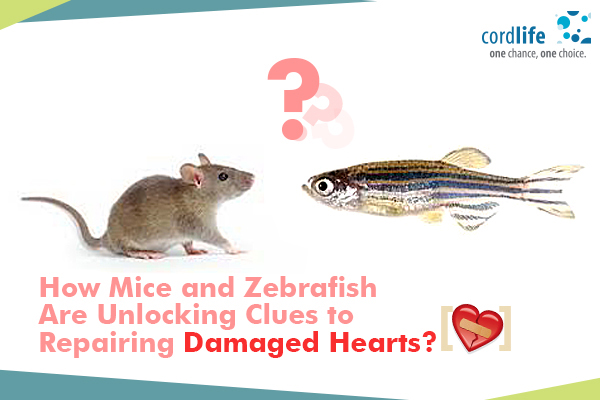 Mice & Zebrafish