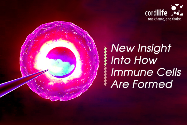 how immune cells are formed