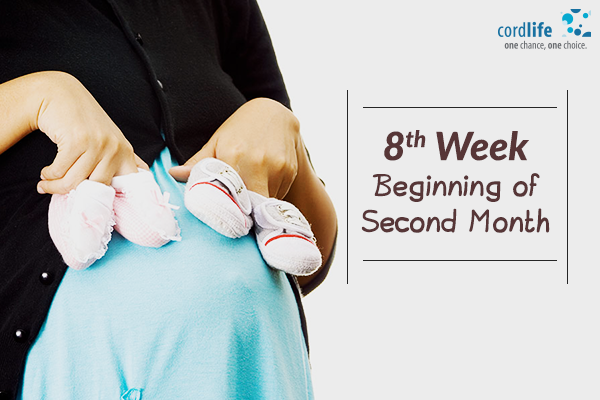Eight-Week-–-Beginning-of-Second-Month