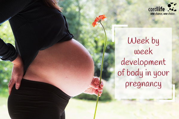 Week-by-week-development-of-body-in-your-pregnancy