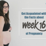 Get Acquainted with the Facts about Week 16 of Pregnancy