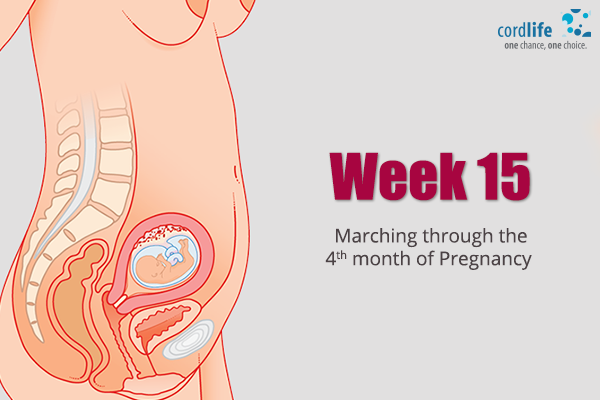 Week-15-Marching-Through-the-Fourth-month-of-Pregnancy