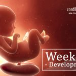 Wondering What happens to you and the baby in 29th week of pregnancy? Find out!