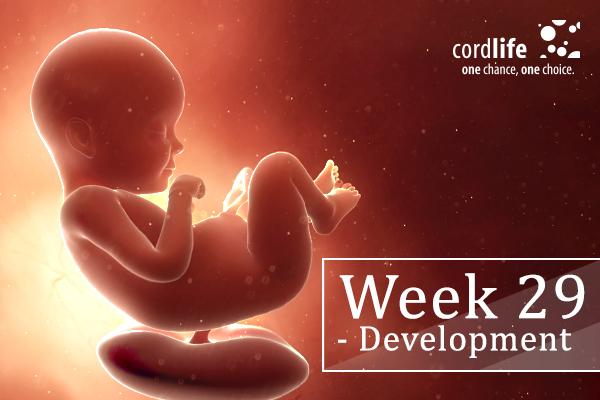 Week 29 - Development