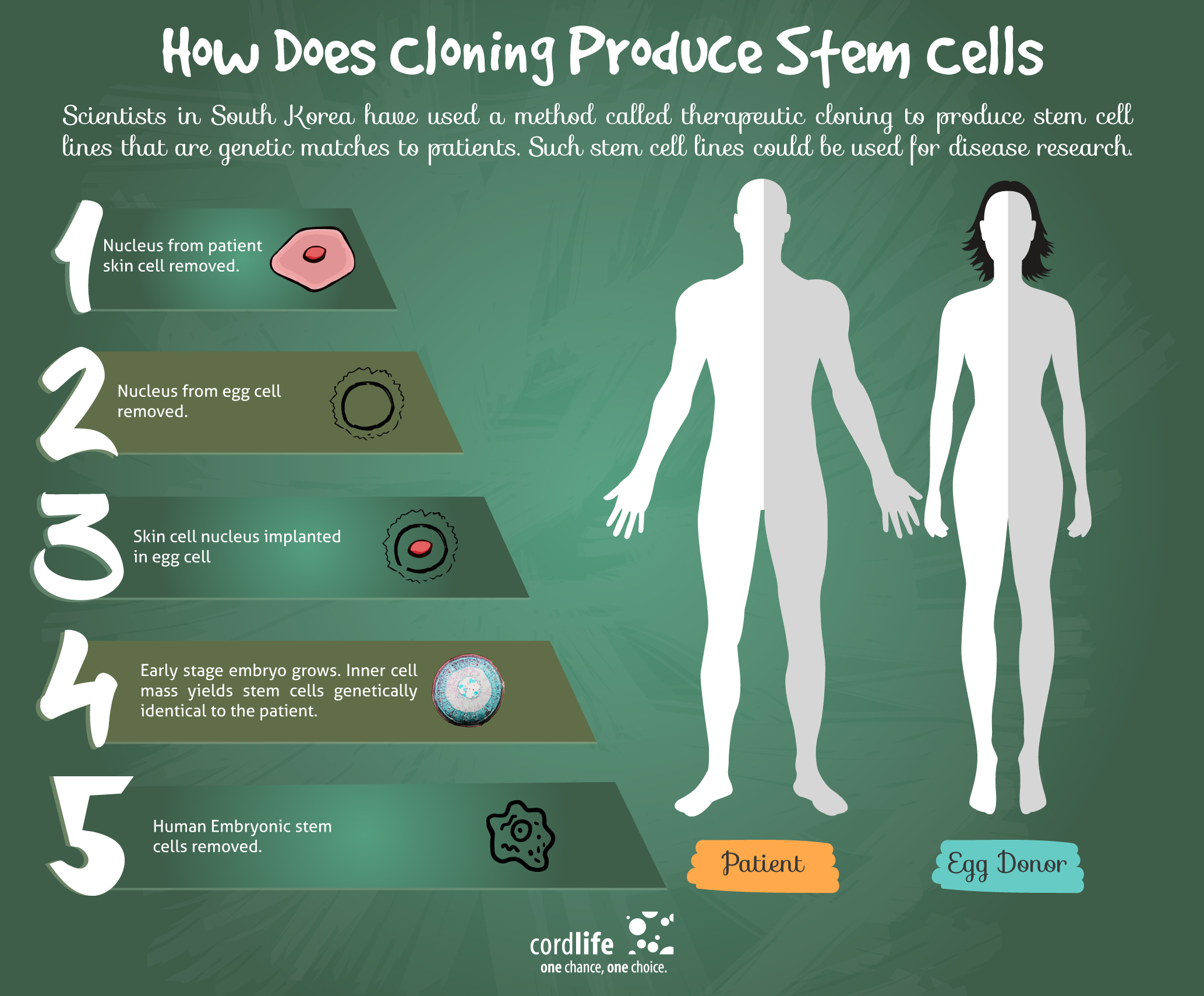 How Does Cloning Produce Stem Cells